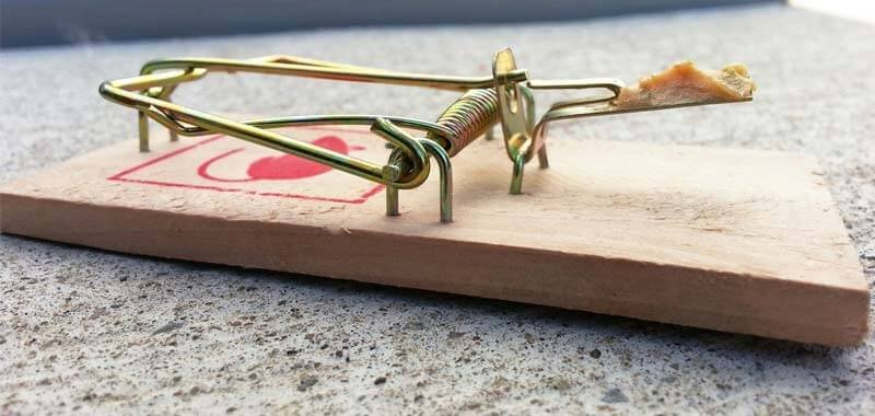 Mouse trap with spring back